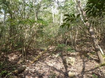 P1150132鞍部の山道.JPG
