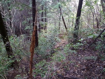 P1150403荒れ気味の植林境.JPG