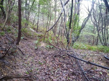 P1150408右谷への旧山道.JPG