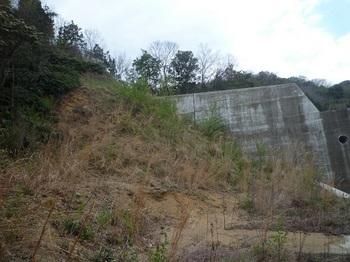 P1150452堰堤横の斜面(逆方向).JPG