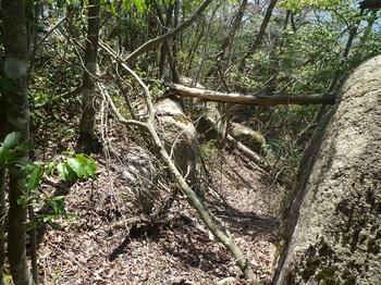 P1150657岩の間を下る.JPG