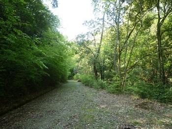 P1150854林道が広くなったところ.JPG