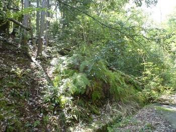 P1150858谷沿いの斜面をよじ登る.JPG