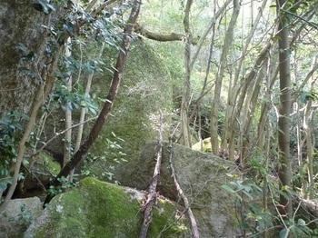 P1150871大岩.JPG