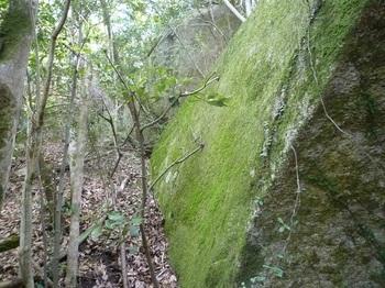 P1150872岩の脇を進む.JPG