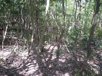 P1150953下降部の雑木疎林谷.JPG