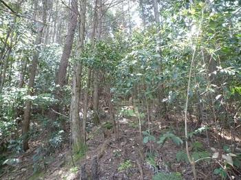 P1150999ヒノキ・灌木.JPG