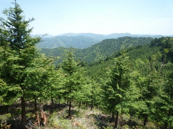 P1160025植林斜面.JPG