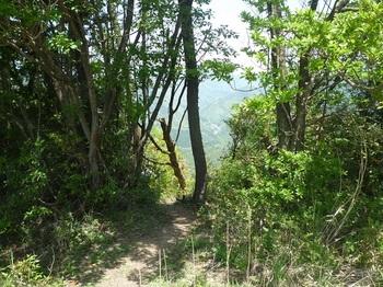 P1160038伐採植林地への踏み跡.JPG