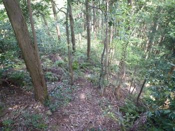 P1160079踏み跡程度の植林管理道に変わる.JPG