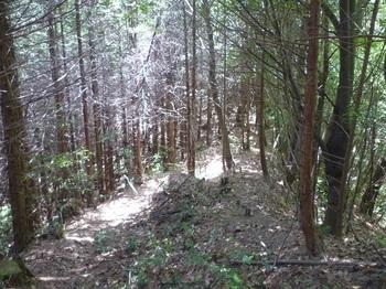 P1160158ヒノキ林境の下り.JPG