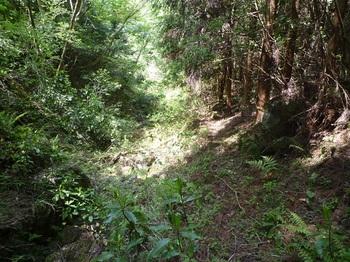 P1160182スギ植林沿いの明瞭な踏み跡.JPG