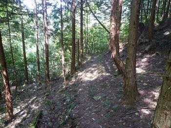 P1160194植林帯のそま道.JPG