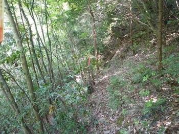 P1160195雑木林のそま道.JPG