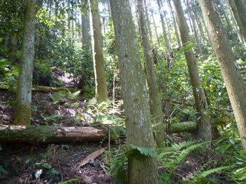 P1160232スギ谷斜面を登る.JPG