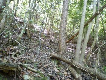P1160237雑木疎林斜面.JPG
