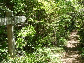 P1160245登山道・道標(山頂まで750m).JPG