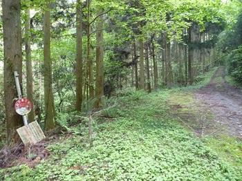 P1160294山火事注意看板・舗装林道.JPG