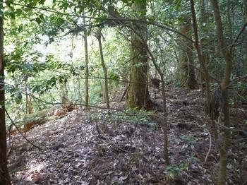 P1160312ややヤブ気味の植林境を登る.JPG