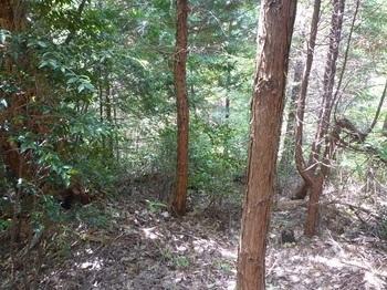 P1160318南尾根ヒノキ林境方向.JPG