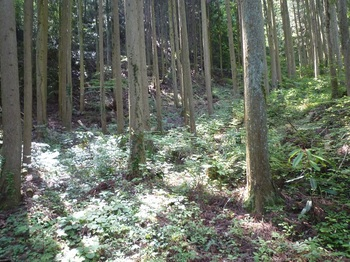 P1160452植林地.JPG