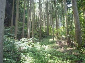 P1160453山道.JPG