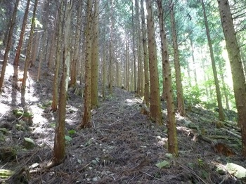 P1160468植林内の山道.JPG