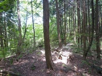 P1160491植林境.JPG