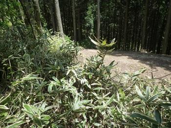 P1160511林道と出会う.JPG