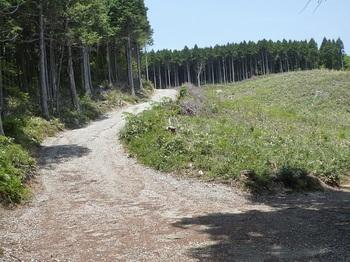 P1160515林道分岐・伐採帯.JPG