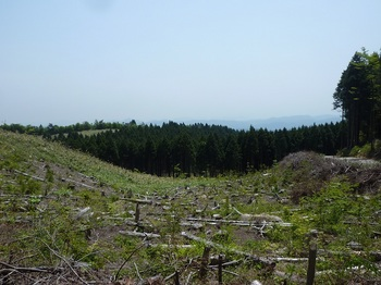 P1160516伐採帯上部から.JPG