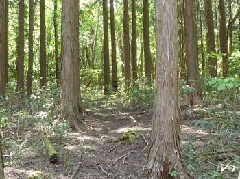 P1160532林道西側斜面.JPG