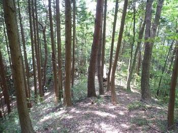 P1160544尾根上に残る雑木林.JPG