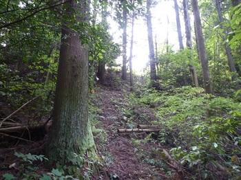 P1160569植林尾根の上り.JPG