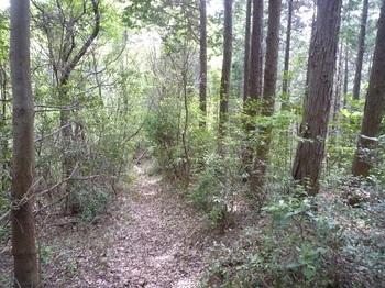 P1160572植林境の下り.JPG