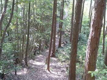 P1160578植林境.JPG