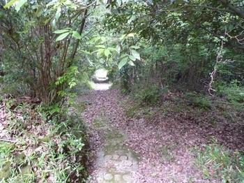 P1160616墓地へ上がるコン道(下方).JPG