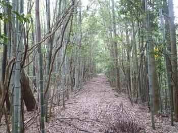 P1160624林道・竹林.JPG
