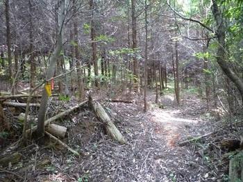 P1160645植林内の巡視路.JPG