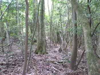 P1160674雑木疎林の切り開き.JPG