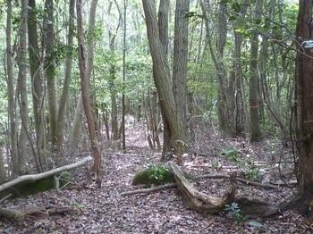 P1160685雑木疎林の切り開き.JPG