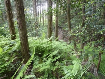 P1160691植林境.JPG