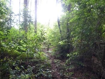 P1160692ヤブの植林境.JPG