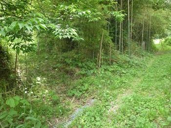 P1160717林道へ出る(逆方向).JPG