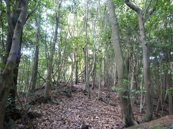P1160735雑木疎林.JPG