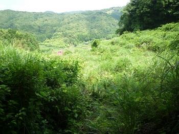 P1160761草被りのあぜ道.JPG