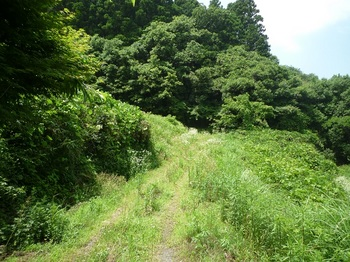 P1160768林道.JPG