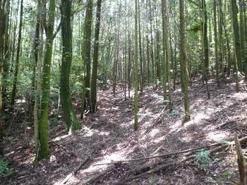 P1160791植林谷を登る.JPG