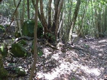 P1160795小岩.JPG