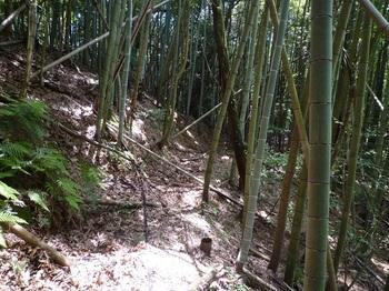 P1160811直進方向の山道.JPG